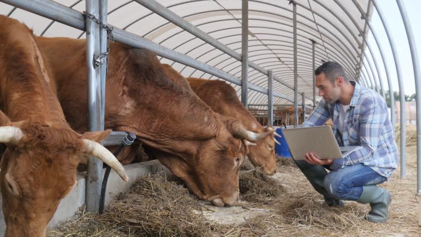 VP2-6.3.1-20 Mezőgazdasági kisüzemek támogatása